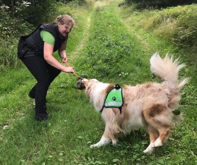 Timba bei der Rettungshundearbeit mit Johanna