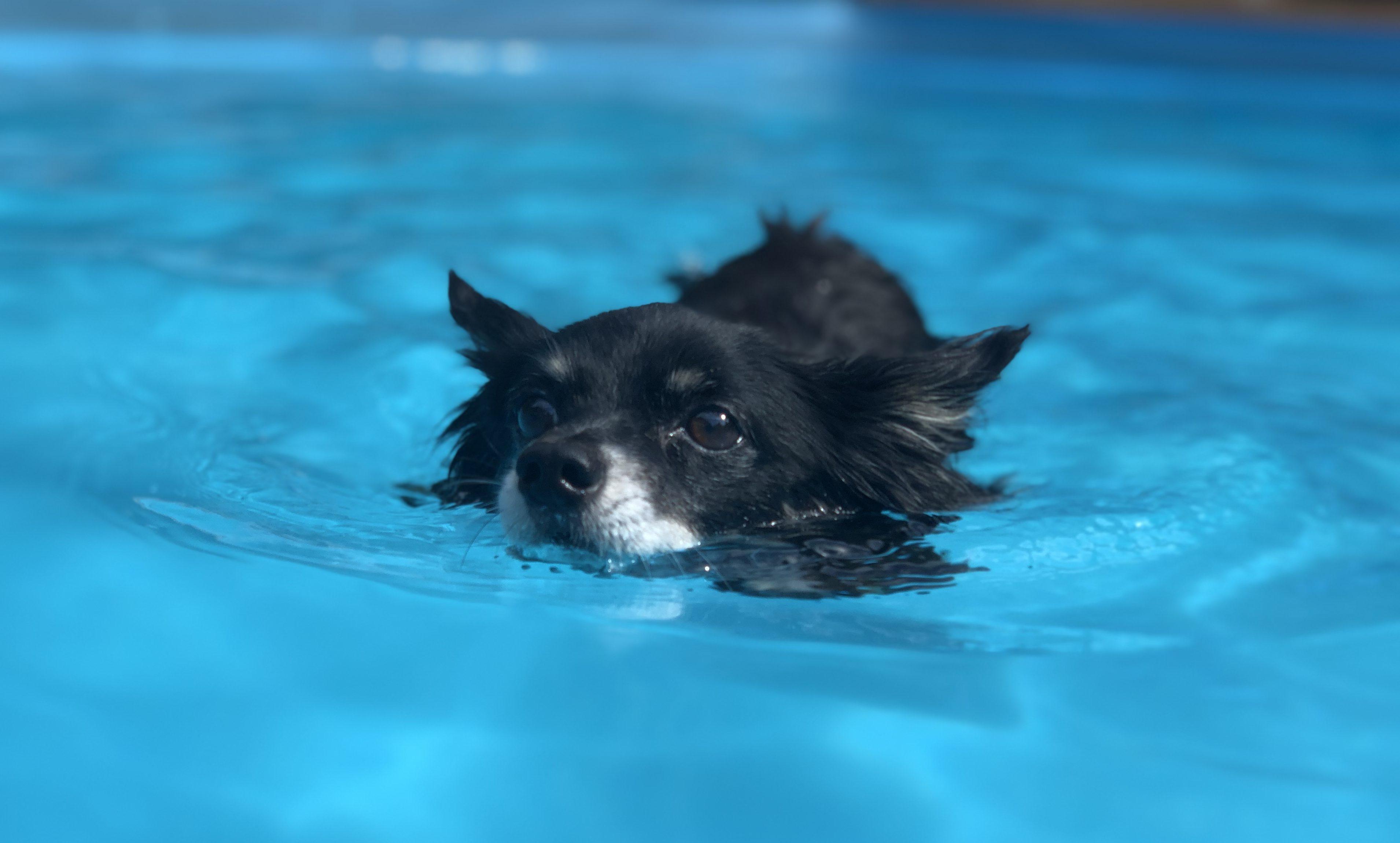 Carlo schwimmt im Wasser