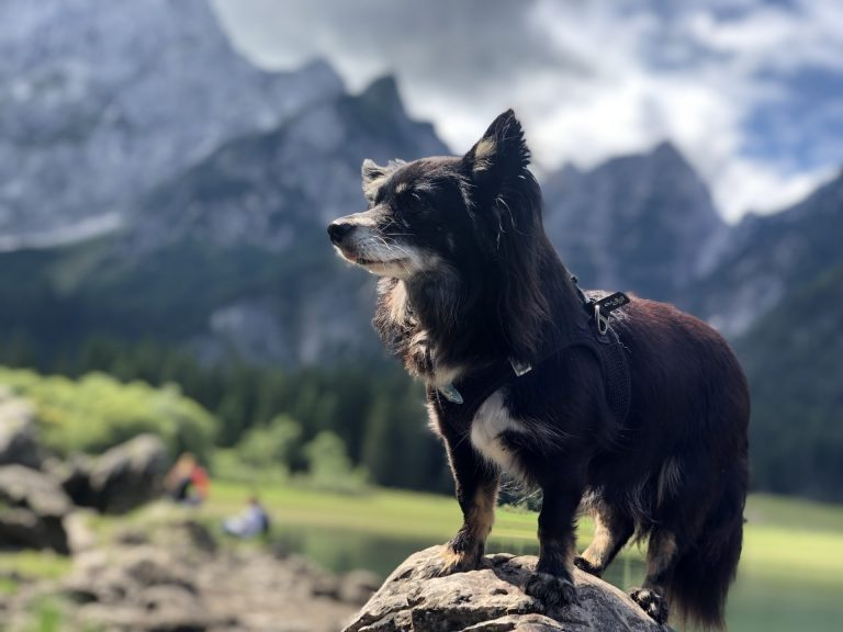 Carlo posiert am Berg beim Wandern
