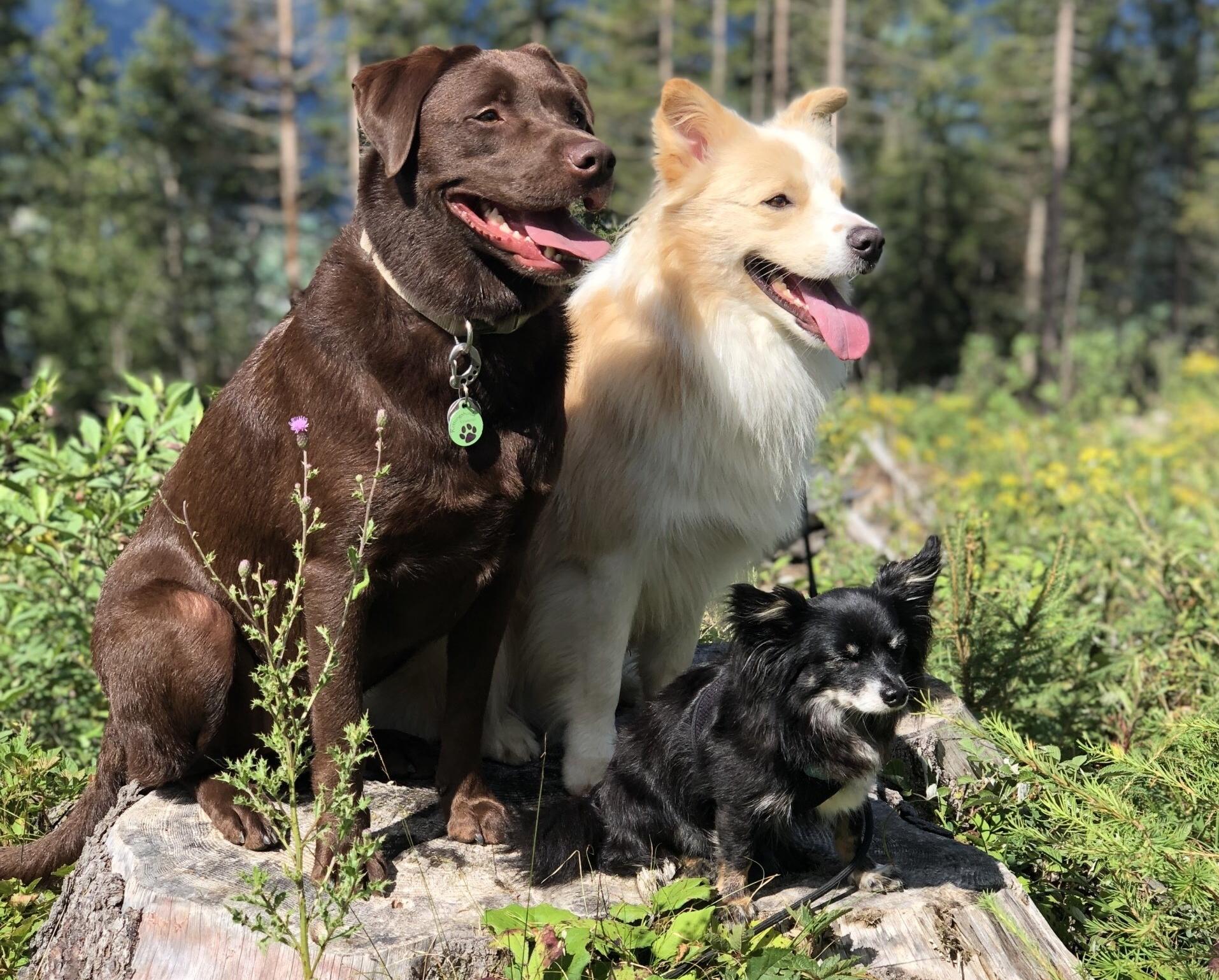 Stella, Carlo und Shorty beim Wandern