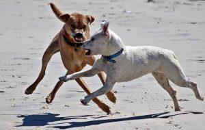 Pöbelnder Hund